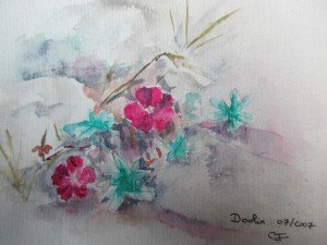 Fleurs dIrlande