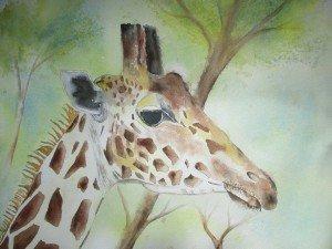 Girafe mars 2017 (1)